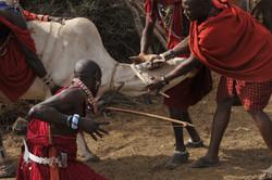 Masai Blood Letting