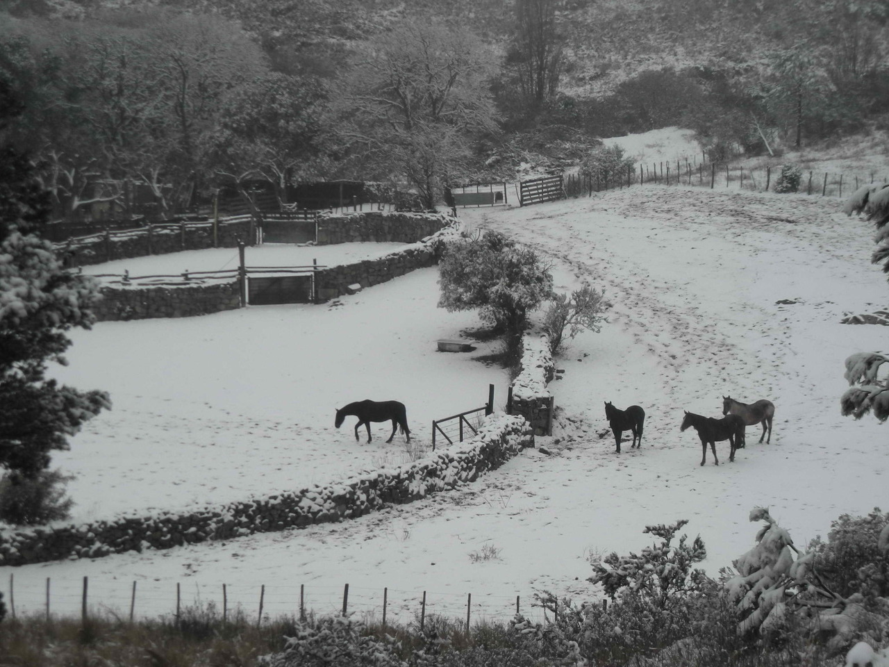 la+vrandjita+nevada+agosto+2011+017+B