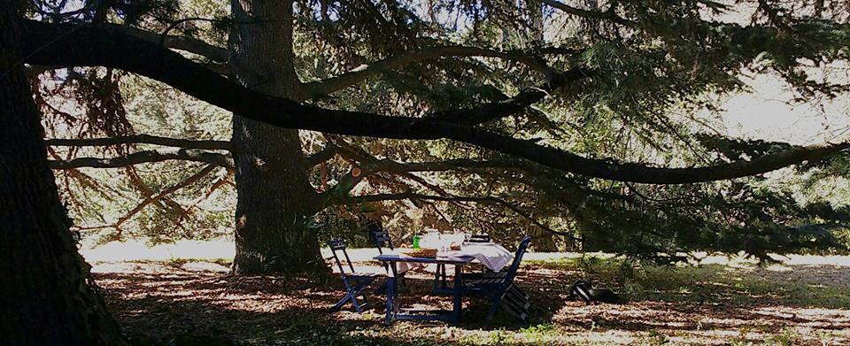 mesa pinos