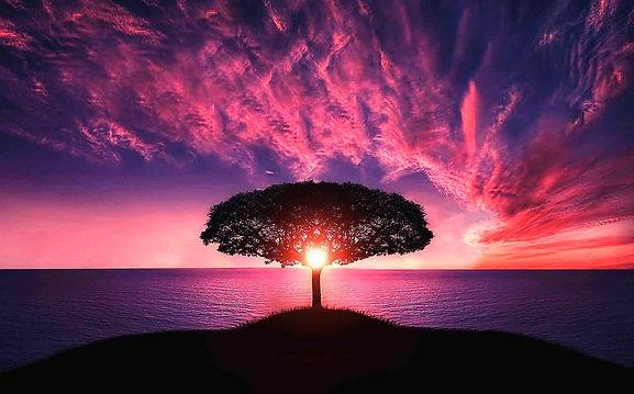 tree-736885_1280_edited.jpg