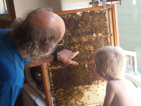 A GLIMPSE INTO URBAN BEEKEEPING WITH TERRY
