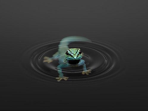 Gecko (Platte) ab