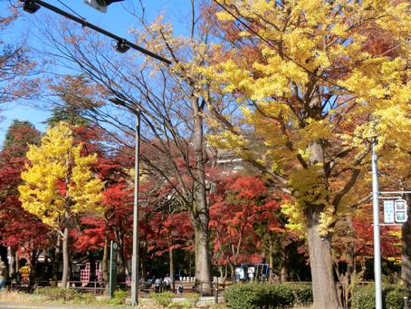 勝山公園の紅葉が見頃の中、PLSの会がオンラインで開催されました。
