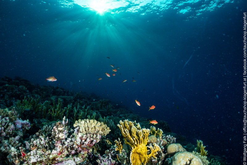 red sea reef sundown