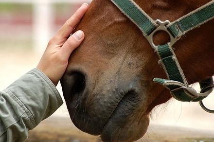 disagio del cavallo photos today