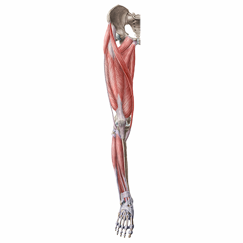 Lower Extremity - Special Tests and Techniques