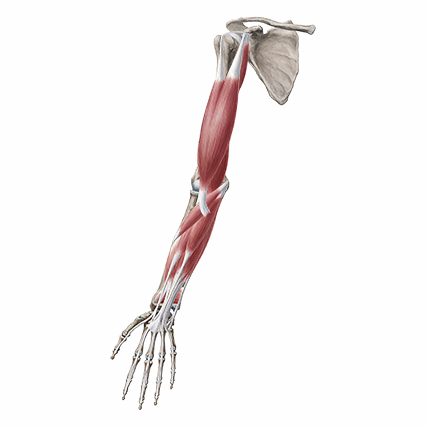 Upper Extremity - Special Tests and Techniques.
