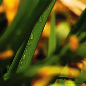 Dew Drops and Tinkling Moss