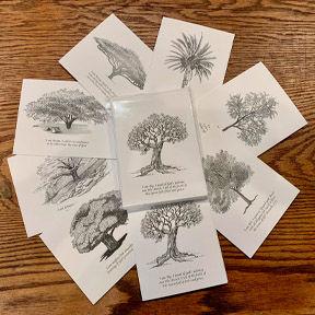 Tree notes 1.jpg