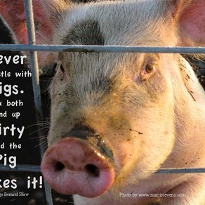 Agnes the Pig has a Message for Us!