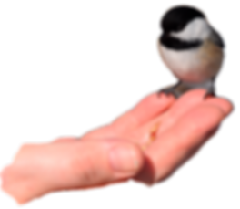 bird in hand.png