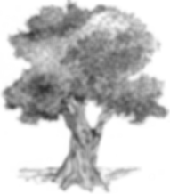 tree no bkgrd1.png