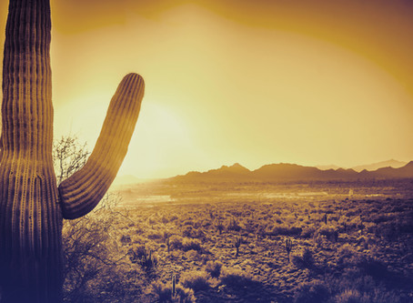 All things are illuminated in the desert...