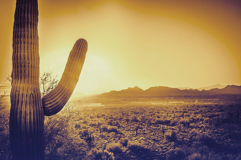 A strong saguaro cactus in Tucson with a financial advisor