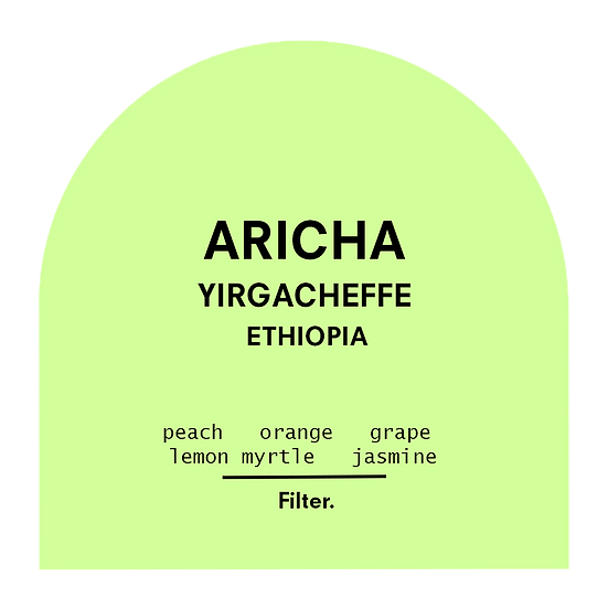 Aricha Washed  | Filter