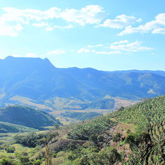 fazenda-alta-vista05.jpg