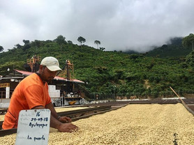 Finca Ayutepeque ~ Parchment Drying