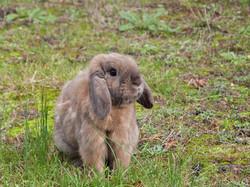 rabbit-1925677