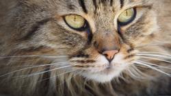 cat-1393075_1920