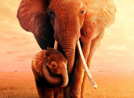 The Wisdom of the Elephant