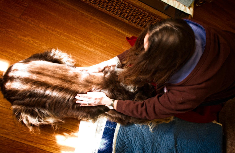 Small Animal Distance Reiki 1 Treatment