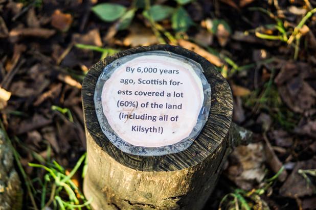 Timber framing in Kilsyth