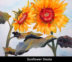 2SunflowerSiestaWeb