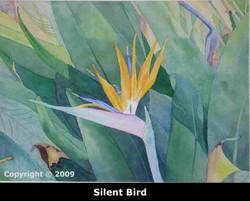 3silentbirdwebsite