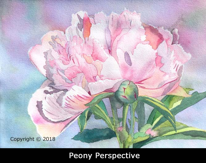 2PeonyPerspectiveWebL1150664