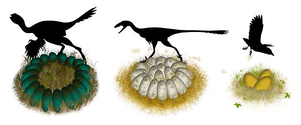 Deinosaur eggs and nests