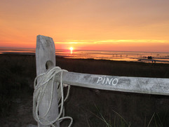 Sunset with fence.jpg