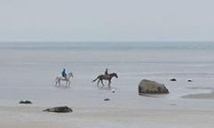 Horses on beach2.jpg
