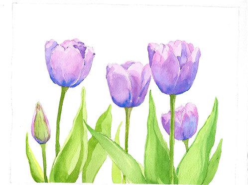 Spring Tulips54 min
