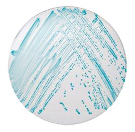 Cronobacter spp. Aranması