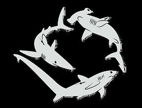 sharklogofinal-notextinvertpng.png