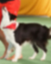 dog dance thumbnail.jpg