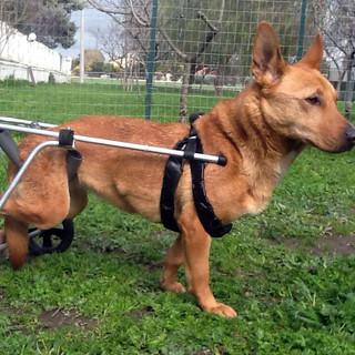 Cani clienti al Danny's Pet Village di Foggia