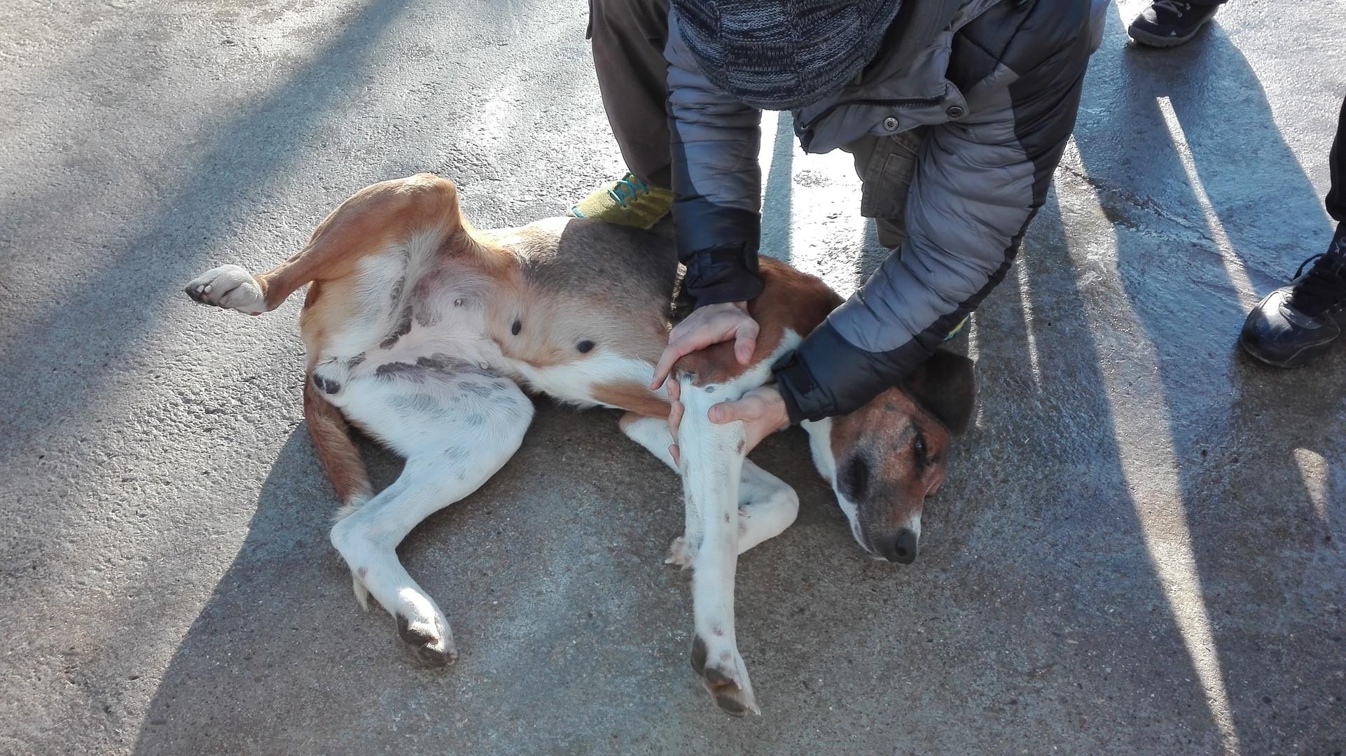 Osteopatia per cani al Doggy Splash di Torino