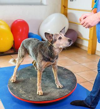 Cani anziani fanno lezione in palestra per cani al Doggy Splash di Torino