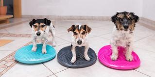 Cuccioli fanno lezione in palestra per cani al Doggy Splash di Torino