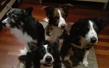 Asilo per cani al Doggy Splash di Torino
