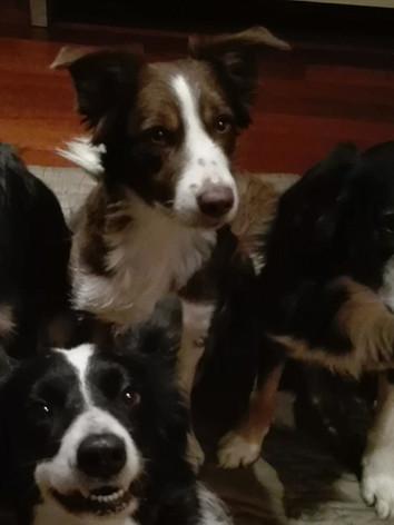 Asilo per cani Torino