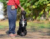 Educazione cani Danny's Pet Village Foggia