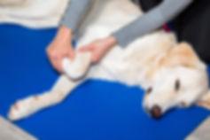 Intervento di osteopatia al Doggy Splash di Torino