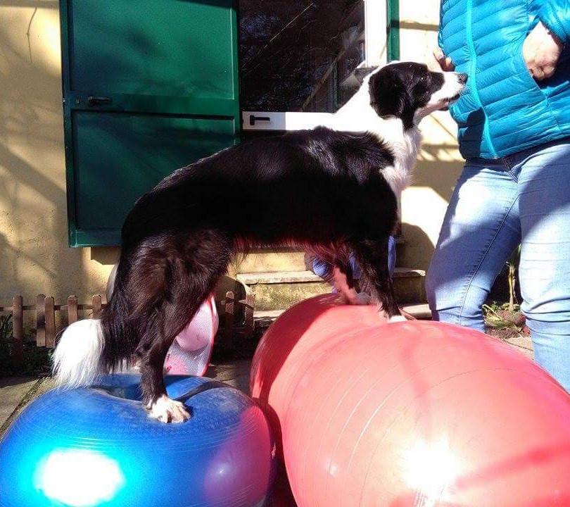 Palestra per cani a Torino