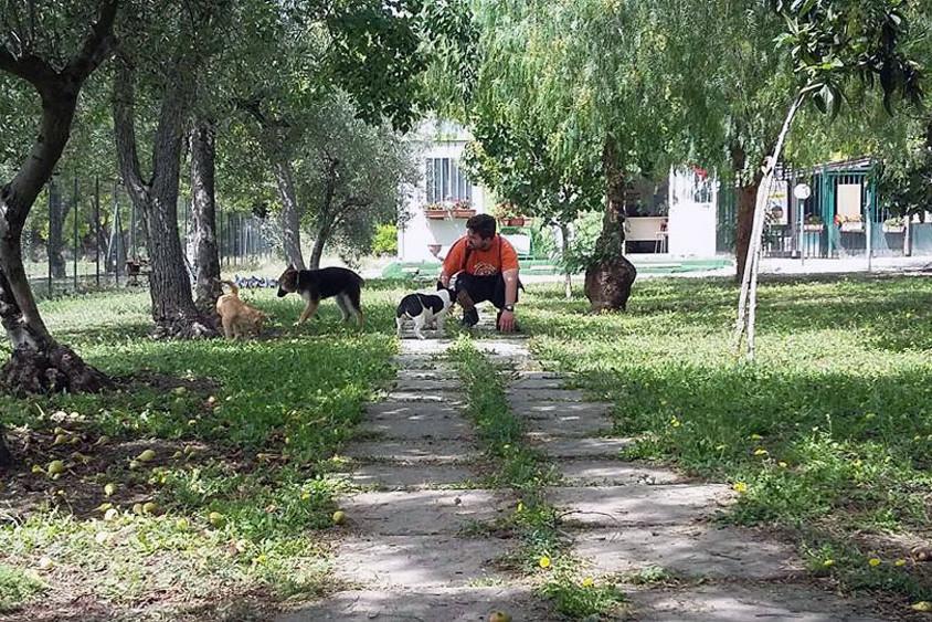 Giuseppe Amoroso Danny's Pet Village