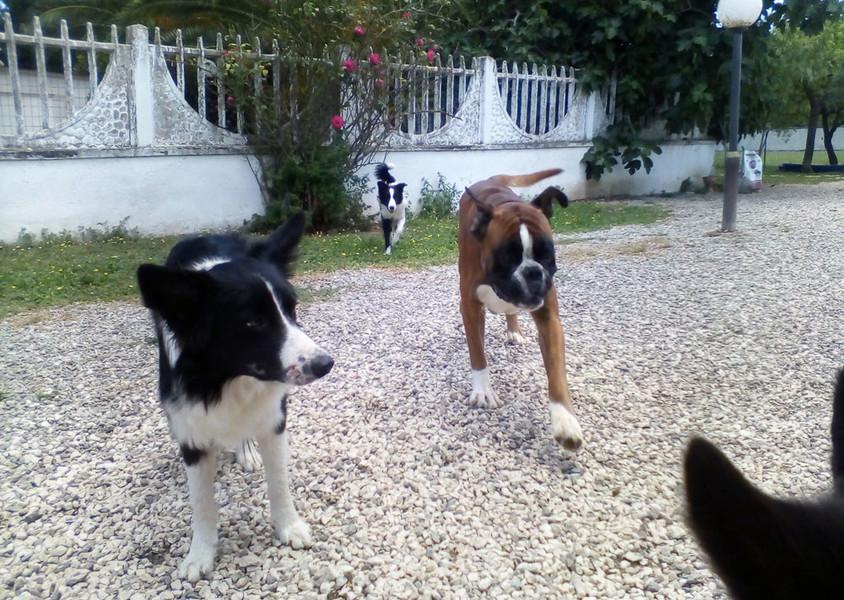 Cani al Danny's Pet Village