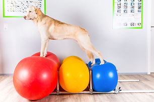 Flessibilità in palestra per cani al Doggy Splash di Torino