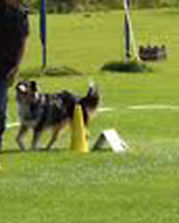 rally obedience trials software