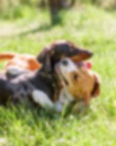 Cani di piccola taglia si divertono all'asilo per cane